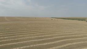 Rilevamento aereo dei campi agricoli durante il raccolto di autunno video d archivio