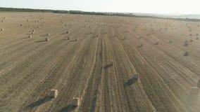 Rilevamento aereo dei campi agricoli durante il raccolto di autunno archivi video