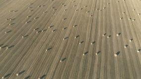 Rilevamento aereo dei campi agricoli durante il raccolto di autunno stock footage