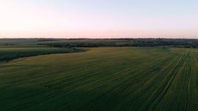 Rilevamento aereo del campo con i tiri verdi Campo del frumento autunnale da fotografia aerea agricoltura I raccolti di grano archivi video