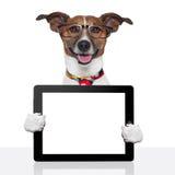 Rilievo di tocco del ebook del pc del ridurre in pani del cane di affari Immagini Stock