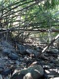 Rill и бамбук стоковое фото rf