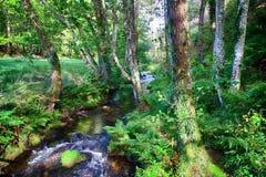 Rill и лес Salgadelos в провинции Луго в Испании стоковое изображение rf