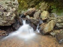 Rill от пещеры в лесе Стоковые Изображения