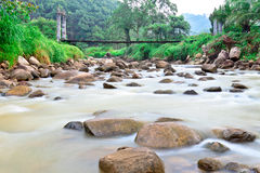 Rill and moisture on rain forest area,Thailand Royalty Free Stock Images