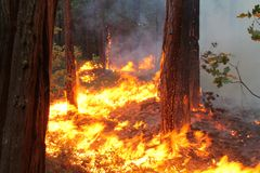 The Rim Fire In Yosemite ~ 2013 ~ Fire Burning Eve Royalty Free Stock Image