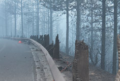 The Rim Fire ~ Yosemite ~ Summer Of 2014. The Rim Fire ~ Summer Of 2014 ~ Road Burnt To Crisp stock images