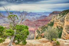 Rim Grand Canyon del sur, Arizona, los E.E.U.U. Imagenes de archivo