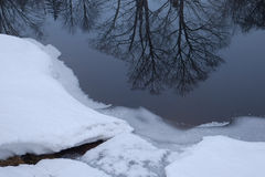 Rim ice and tree reflections Royalty Free Stock Photo