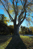 Rim light behind the tree Royalty Free Stock Photo