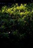Rim light on bush Stock Photo