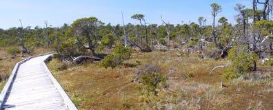 Rim National Park pacifico Immagine Stock