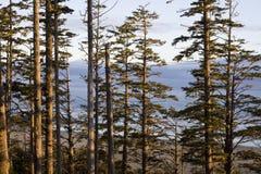 Rim National Park pacifico, isola di Vancouver, Columbia Britannica Fotografia Stock Libera da Diritti