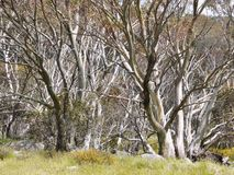 Rim of the wood with silver trees Stock Image