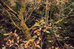 Rimanere va per essere caduto in autunno in foresta Fotografia Stock