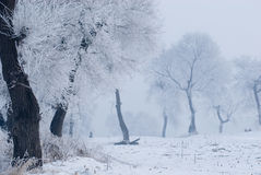 Rime. China cold island morning nature north plants rime river snow travel tree Royalty Free Stock Photography