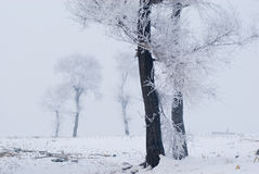 Rime. China cold island morning nature north plants rime river snow travel tree Royalty Free Stock Photo