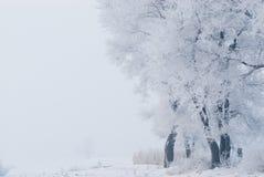 Rime. China cold island morning nature north plants rime river snow travel tree Stock Image