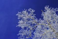 Rime. Mudanjiang northeast of China, on the slope, I saw the rime and red lantern under sky. very beautiful Stock Images