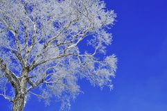Rime. Mudanjiang northeast of China, on the slope, I saw the rime and red lantern under sky. very beautiful Stock Image