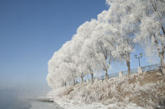 Rime. Also known as , is a kind of cold weather in northern China and other places, trees, water vapor after experiencing a natural phenomenon, is one of the Royalty Free Stock Photos