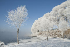 Rime. Also known as , is a kind of cold weather in northern China and other places, trees, water vapor after experiencing a natural phenomenon, is one of the Stock Photo