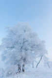 Rime Stock Images