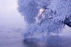 Rime. In  lsland at northeast china Royalty Free Stock Photography