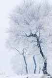 Rime. Tree in winter in a north island Stock Photo