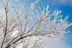 Rime of branch and blue sky Royalty Free Stock Image
