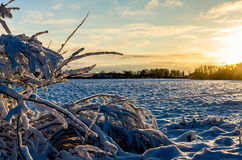 Rime on a bush in the Baltic winter at sunset. Winter in the Estonian village of Lokuta in Türi, Järva County royalty free stock photography