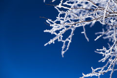 Rime,Christmas,winter landscape. Winter snow-covered branch on the blue background stock photo