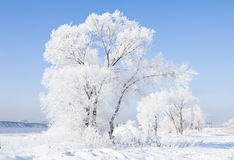 Rime. Is cold mist and vapor condenses on the ice leaves, divided into two kinds of granular and crystalline.  granular compact structure, forming a small Royalty Free Stock Photos