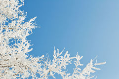 Rime Stock Photography