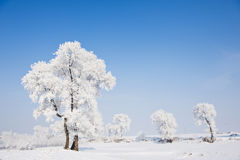 Rime. Is cold mist and vapor condenses on the ice leaves, divided into two kinds of granular and crystalline.  granular compact structure, forming a small Stock Image