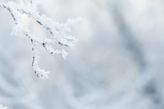 Rime covered branches of tree in winter Royalty Free Stock Image
