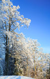 Rime covered trees in winter mountain Royalty Free Stock Image
