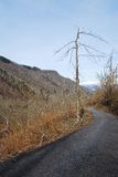 Rime Damaged Tree near Canebola Royalty Free Stock Photos