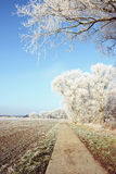 Rime frost landscape at field in Havelland Brandenburg - German Stock Photography