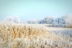 Rime frost landscape at Havel river Brandenburg - Germany Stock Image