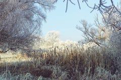 Rime frost landscape at Havel river Brandenburg - Germany Stock Photo