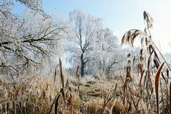 Rime frost landscape at Havel river Brandenburg - Germany Stock Images