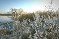Rime frost landscape at Havel river Brandenburg - Germany Royalty Free Stock Photo
