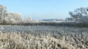 Rime frost landscape at Havel river Brandenburg - Germany. Along Havel bike path Havelradweg in Havelland region. Rime frost landscape at Havel river stock video