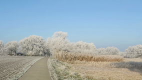 Rime frost landscape at Havel river Brandenburg - Germany. Along Havel bike path Havelradweg in Havelland region. Rime frost landscape at Havel river stock video footage