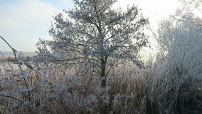 Rime frost on tree tops of willow trees in winter against blue sky. stock footage