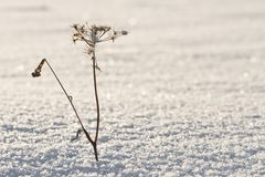 Rime on grass Royalty Free Stock Photography