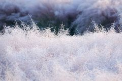 Rime grass Royalty Free Stock Photo