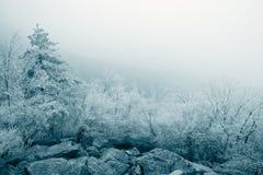 Rime ice landscape Stock Image