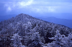 Rime Ice on Mt. Mitchell Royalty Free Stock Photos